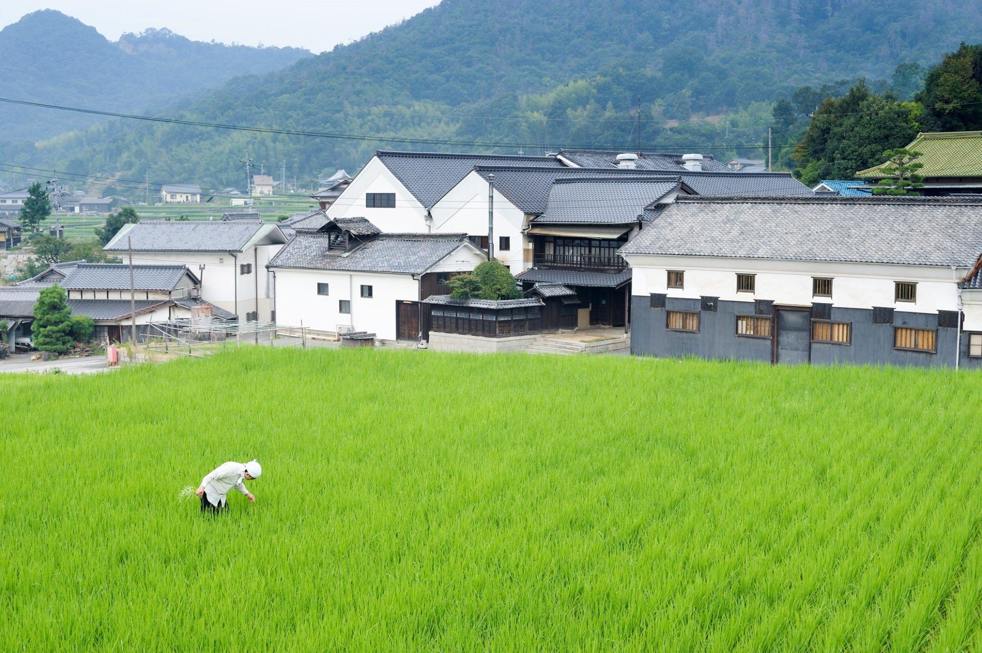 La maison de saké MARUMOTO SHUZO